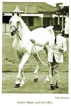 Indian Magic (Raktha x Indian Crown, Raseem) - 1944 Arabian stallion bred by Lady Wentworth of Crabbet Stud. Supreme Male Champion in 1957. Pictured with his handler, Fred Rice.