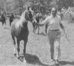 "Lewisfield Nizziza (by *Nizzam) in hand as a yearling, from ""The Look of Eagles"" brochure where Nizziza is noted as ""many-times champion mare at large Class A shows."""
