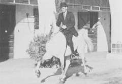*Raseyn racking, Charles Smith up. Photo taken in the stable patio, W. K. Kellogg Arabian Horse Ranch.