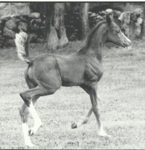 1998 Bodacious Storm filly out of Silver Gold (by Silvadoris), owned by Windswept Farm.
