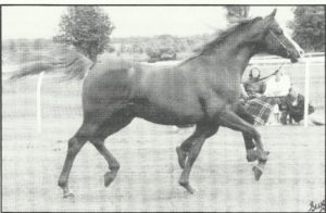 Aurelian, best known as the sire of Aureme. It has been proven that Ben Rabba's grandget are making a name for him even moreso than his direct get.