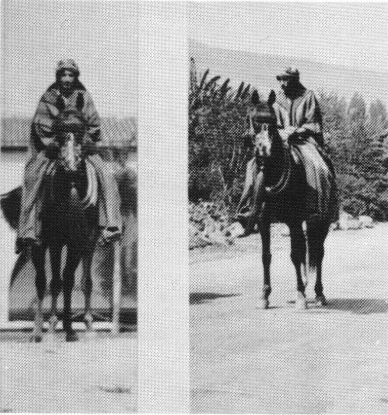 Leila 275 in Arab costume, rider not identified. Photos taken at Kellogg Ranch; left picture background is the stable patio, right picture background is Anazeh Loop Road. WK Kellogg Part 12 by Carol Woodbridge Mulder, 1990 The Crabbet Influence in Arabians Today magazine article.
