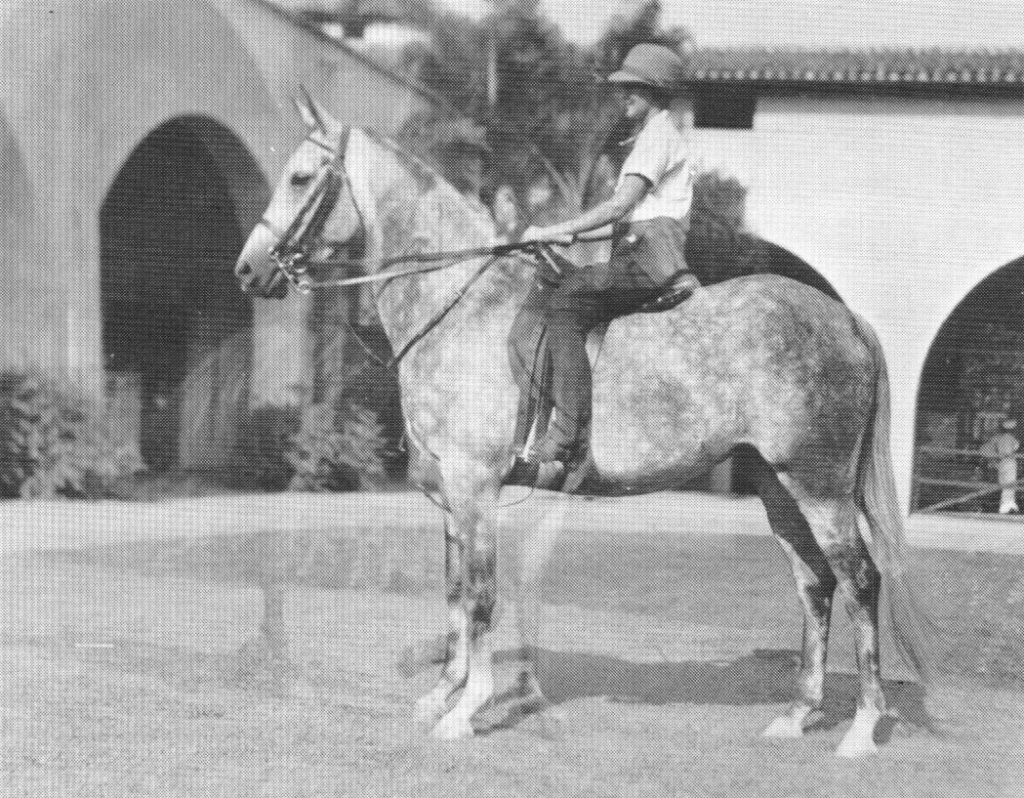 Rasrah 865. In 1935 at age 5. L. Marian Woodbridge riding. In the patio of the Kellogg Stables. Sorry that the photo is a double exposure, but the standing image is clear enough to get an idea of the mare. Photo from Carol Woodbridge Mulder article on Crabbet.com, as published in the Crabbet Influence magazine.