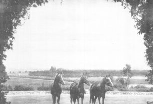 (Left to Right) Rifnada 836, Danas 842, and Ferdas 841. This photograph was taken from the entrance to the Kellogg stables; the horses are shown standing in the parking lot.