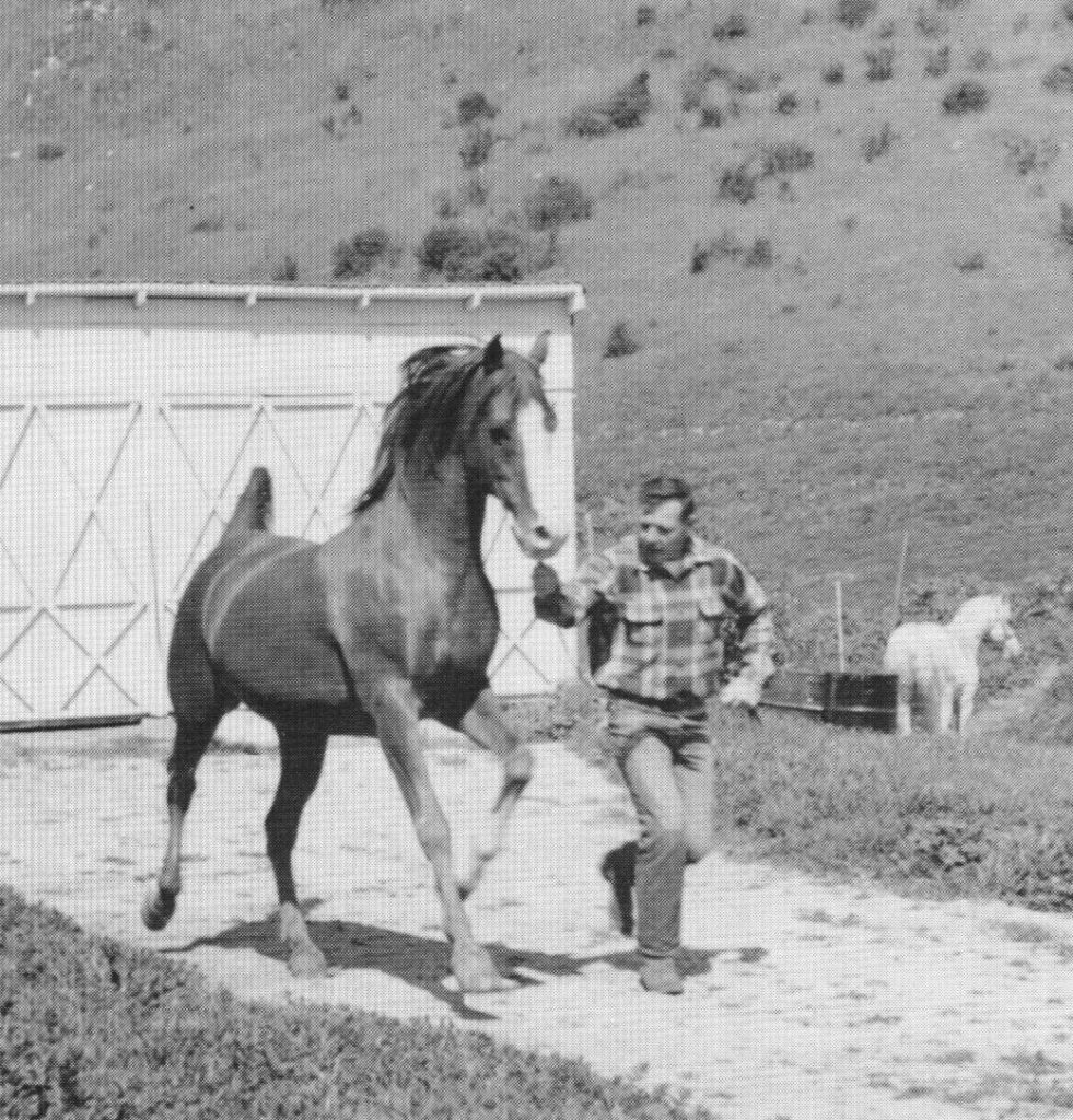Abu Farwa 1960. March 1958, age 17. With Gordon J. Lemons. Ferseyn 1381 in background. At the H.H. Reese Ranch, Chino, California. Carol Woodbridge Mulder photo from her article originally published in the Crabbet Influence magazine and shared here on Crabbet.com