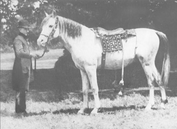 Azrek GSB 70 (A Saqlawi Jidran DB). Grey stallion purchased in the desert in the spring of 1887 and imported to England in 1888.