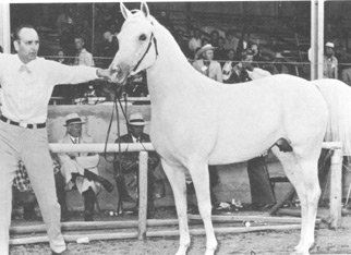 Dr. Bill Munson and Rose of Raswan taking Reserve National Champion Mare. From Jim Robbins interview article originally published in the Crabbet Influence magazine and shared here on Crabbet.com