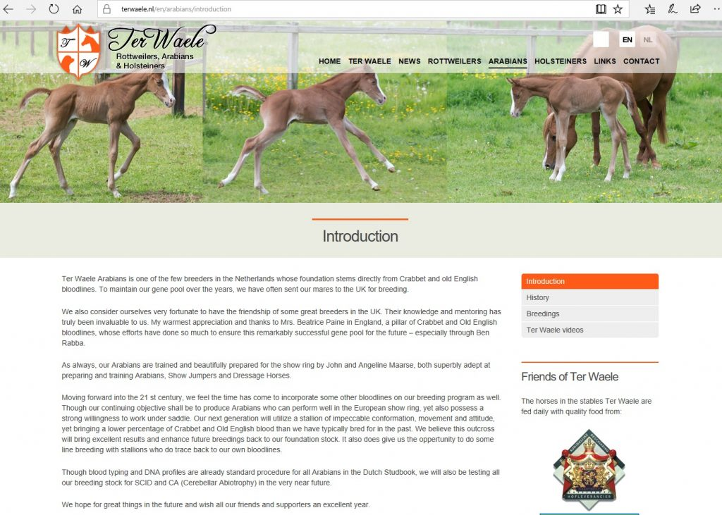 TerWaele Arabians (NL). Breeding Arabians with Crabbet and Old English bloodlines.