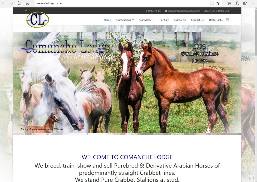 Comanche Lodge (AU). Breeding Pure Crabbet & high-percentage Crabbet Arabians, Pure Crabbet stallions at stud.