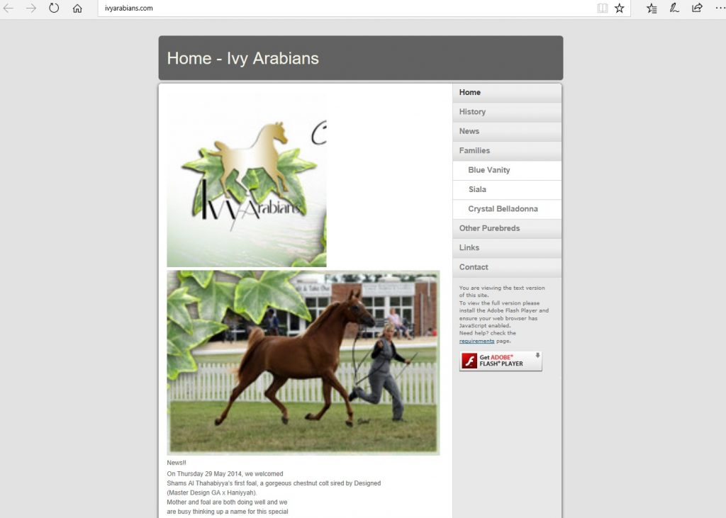 Ivy Arabians (UK). Breeding Pure Crabbet Arabians.