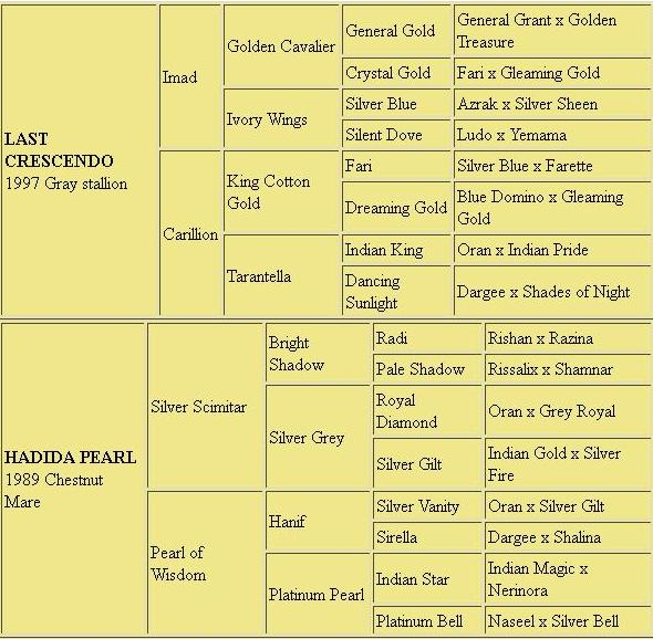Pedigrees for the Templars Stud Arabians, Last Crescendo (1997 Gray Stallion by Imad and out of Carillion) and Hadida Pearl (1989 chestnut mare by Silver Scimitar and out of Pearl of Wisdom)