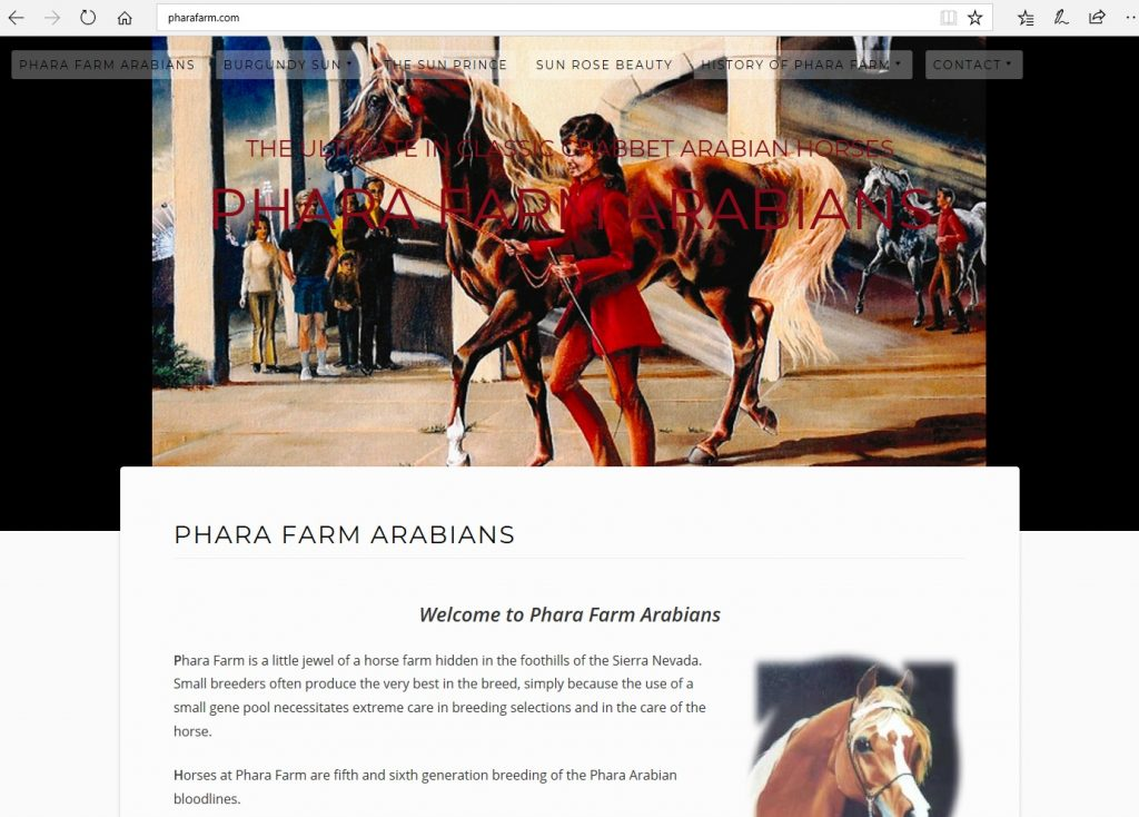 Phara Farm Arabians. Breeding high percentage Crabbet & CMK Arabians, linebred to the Pure Crabbet Lewisfield Sun God.