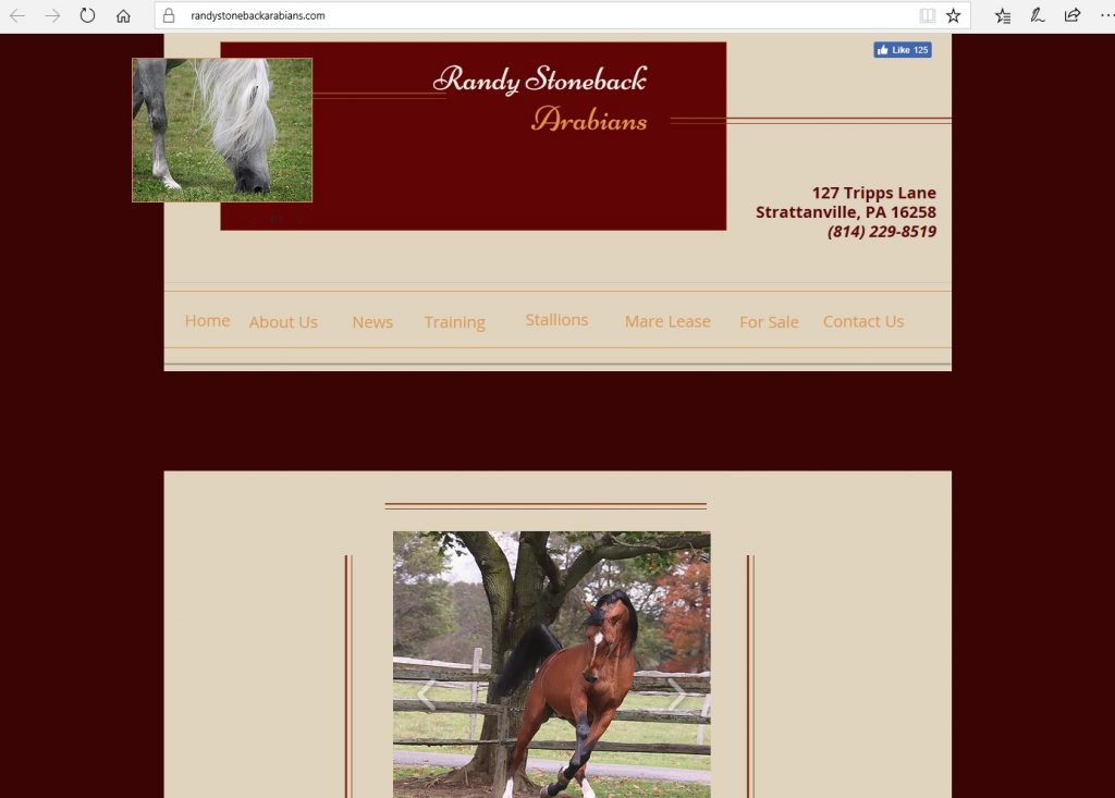 Randy Stoneback Arabians. Breeding high percentage Crabbet & CMK Arabians, from Azraff/Ferzon bloodlines.