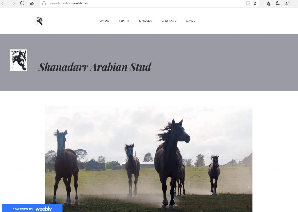 Shanadarr Arabian Stud (AU). Breeding Pure Crabbet & high percentage Crabbet Arabians for performance and show.