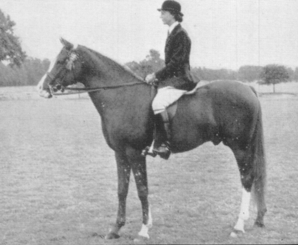 Count Manilla winning 1st in Stallions under saddle, 1956 Roehampton, England. Arab Horse Society News photo, Autumn 1956 issue.