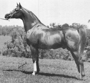 Farhan (Crystal Fire x Fantasy) became a great sire of broodmares.