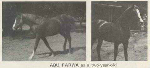 Abu Farwa as a two year old