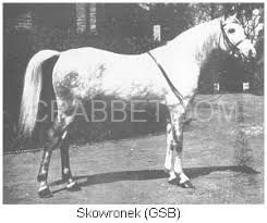 Skowronek as a young horse